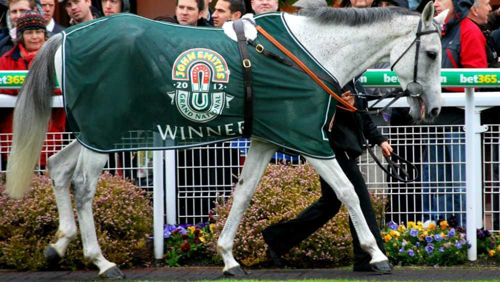 2012 Grand National Grey Horses